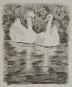 Sweetheart Swans .web